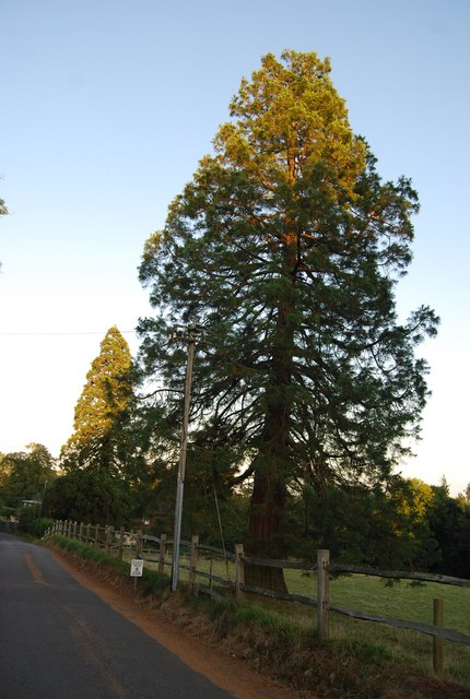 Giant Redwoods, Froghole Lane