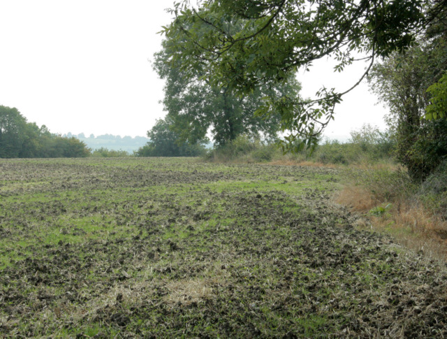2009 : Ex wheatfield west of Lodge Road