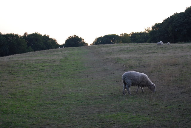 Sheep on the path to Crockham Hill