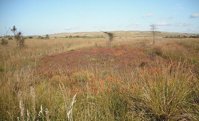 Moss land, Meikle Drumgray