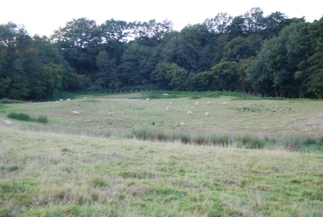 Sheep on the Greensand Escarpment, Crockham Hill