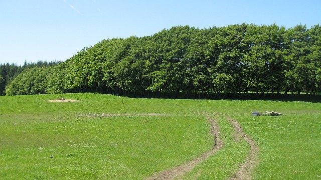 Field beside Portmore Loch