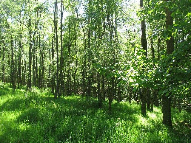 Deciduous woodland, Portmore