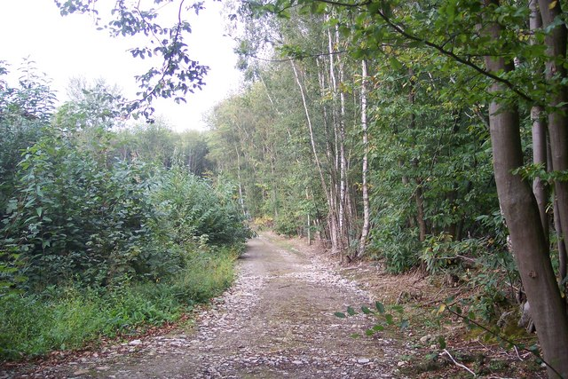 Access track beside Foxearth Wood