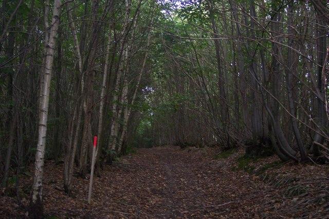 Footpath in Foxearth Wood