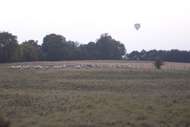 Sheep in a field near Digdog Lane