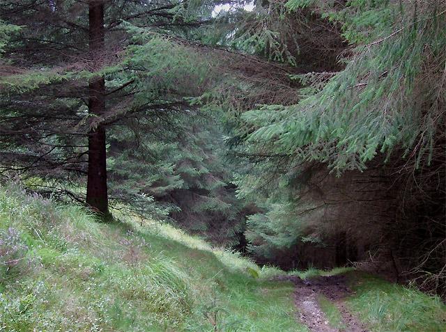 Bridleway through the Tywi Forest, Powys