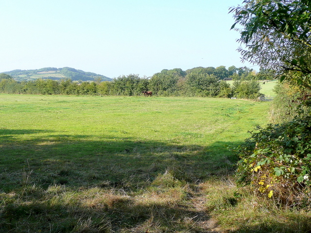 Pasture at Lower Apperley