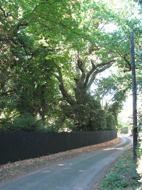 Fox Lane