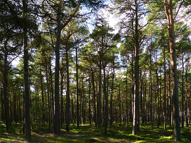 Balblair Wood