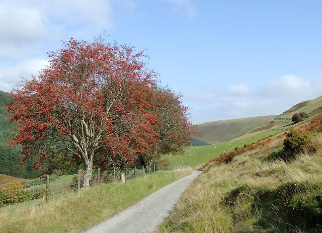 Drover's road at Nant-y-Stalwyn, Cwm Tywi, Powys