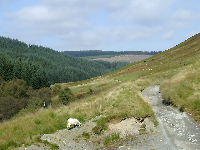 Drover's road and  Cwm Tywi, Powys