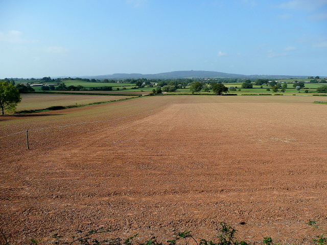 Newly-sown arable land west of Limbury Hill