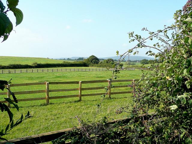 Limbury pasture
