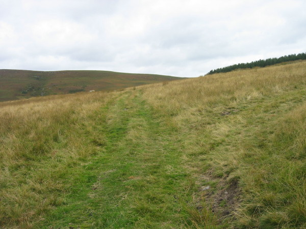 Bridleway above Harehope Farm
