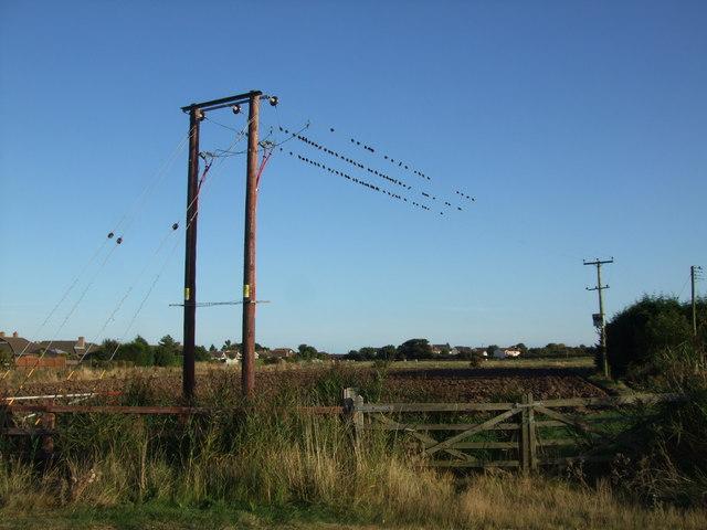 Birds on transmission lines at Alford Road