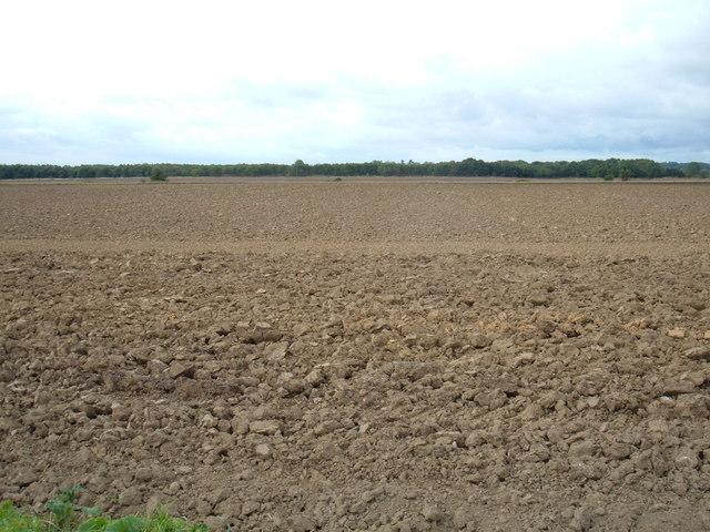 Farmland, Darrell's Low Farm