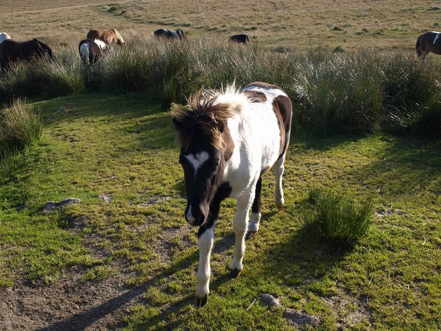Foal near Swincombe