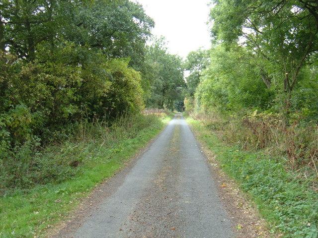 Track Beside New Ings Plantation
