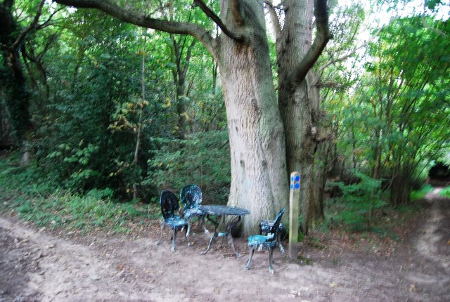 Table & chairs by a tree, Crockham Hill Common
