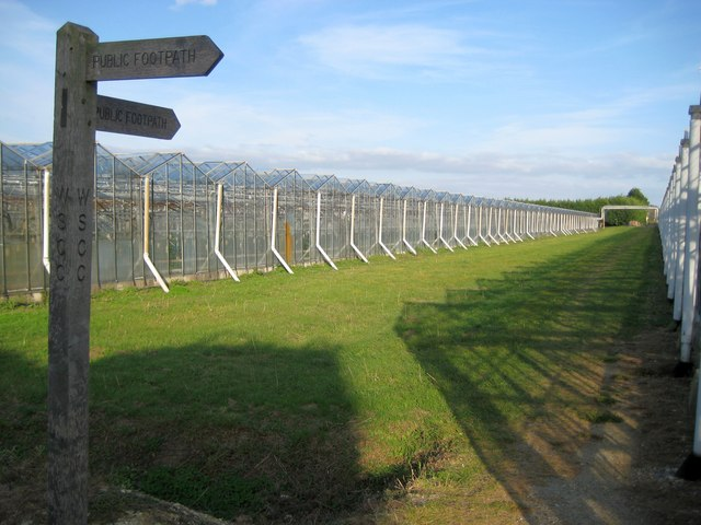 Toddington: Glasshouses and public footpath