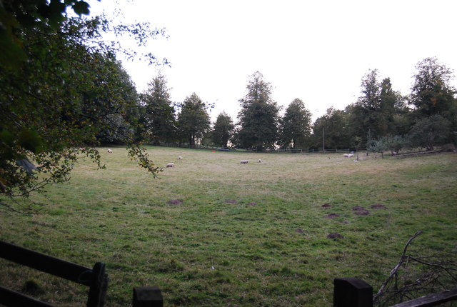 Clearing on the edge of Crockhamhill Common
