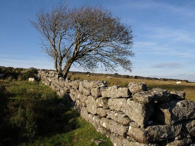 Wall and tree, Swincombe