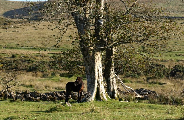 Foal at Swincombe