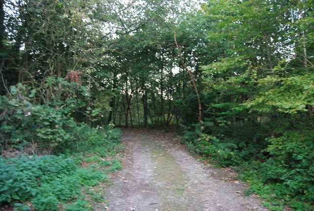 Footpath through Crockham Hill Common