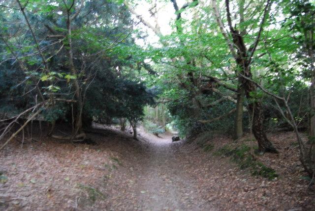Sunken lane through Crockham Hill Common