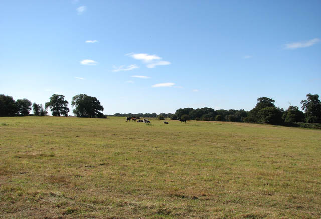 Cattle pasture above the River Yare