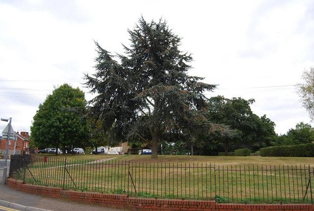 Large tree by The Slade, Tonbridge