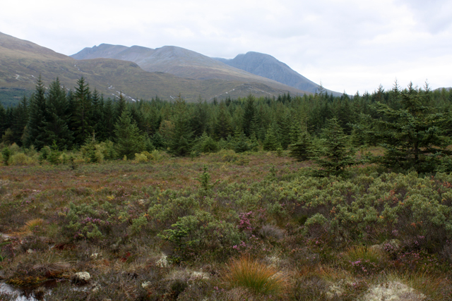 Boggy clearing, Leanachan Forest