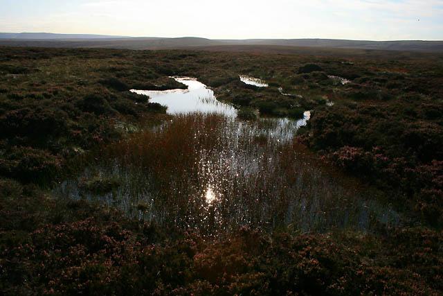 Pond on Ridgewalk Moor