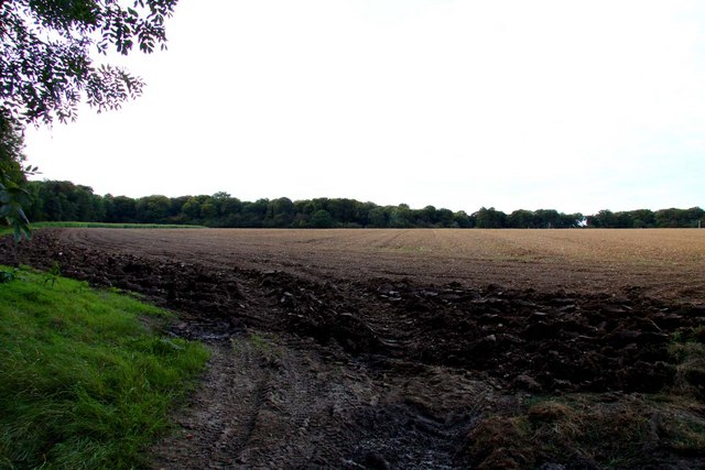 Field by Hill Farm near Aston Rowant