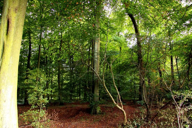 Woods at the Aston Rowant Nature Reserve