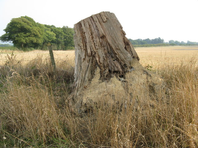 Tree stump alongside field on Swains Farm