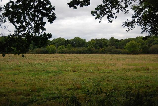 Field by The Wealdway