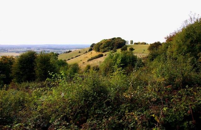 Looking across bushes towards Beacon Hill