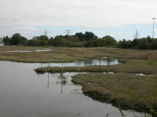 Holes Bay, saltmarsh