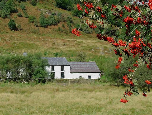 Dolgoch Hostel through the rowan trees, Cwm Tywi, Ceredigion