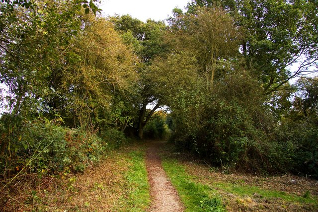 Path for the disabled at Aston Rowant Nature Reserve