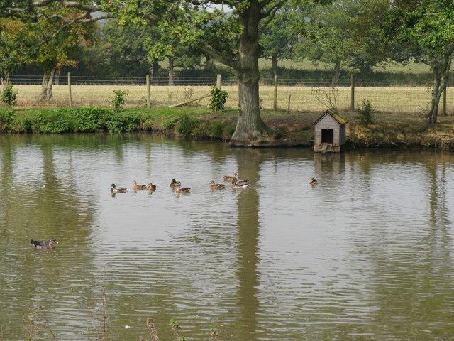Ducks and duck house near Chates Farm
