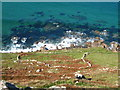 SW3627 : Ancient field boundaries below Escalls Cliff by Rod Allday