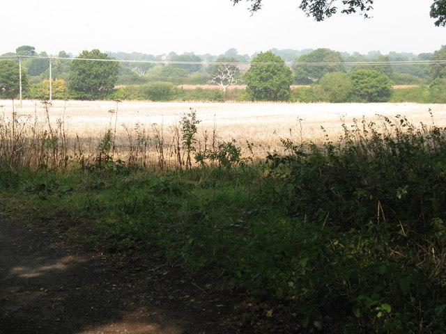 View north across fields towards Cowfold