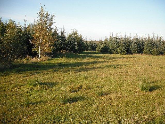 Forest, Glentore