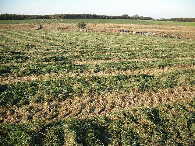 Cut grass, Luckenburn