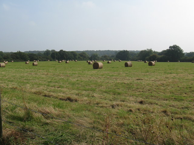 Straw bales waiting for collection
