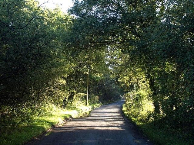 Ifield Wood