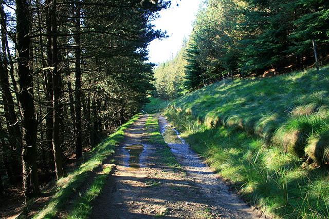 Track Through the Plantation